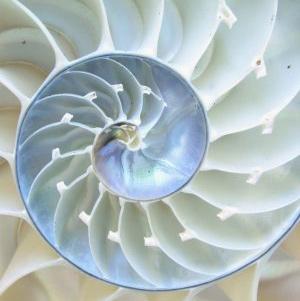nautilus-square plaatje